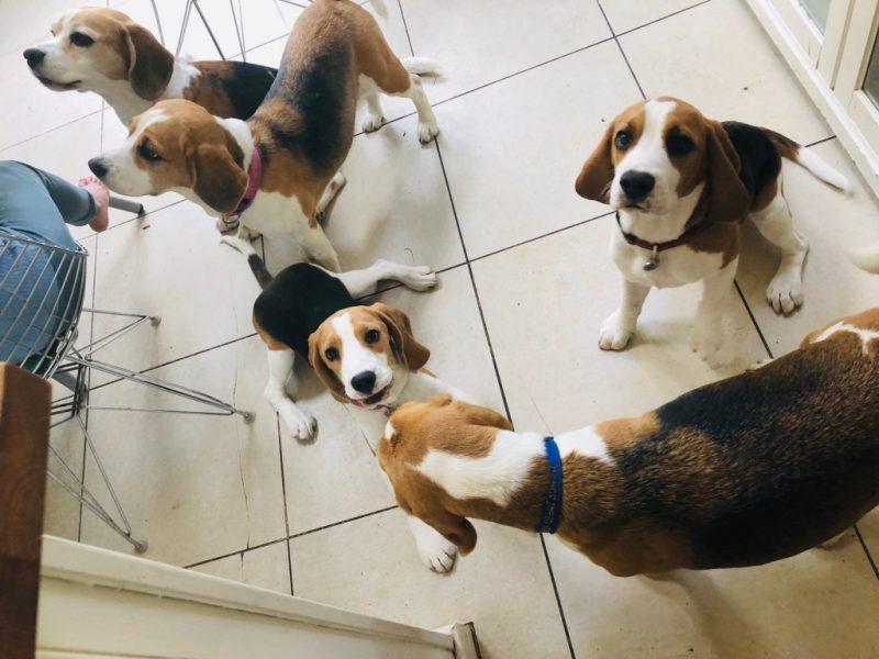 Oak View Primary & Nursery School » Bella – Our School Dog